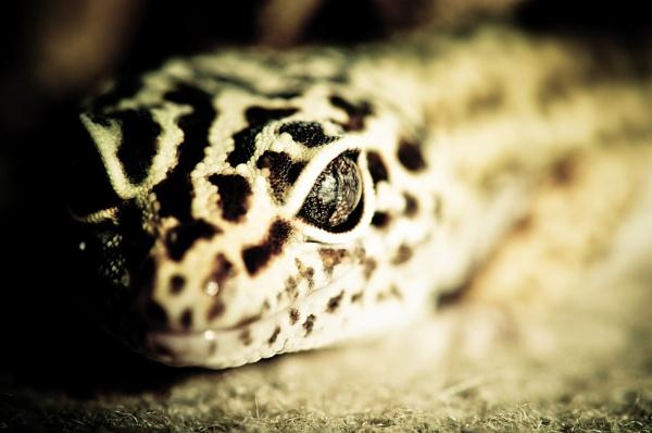 Gecko I by Alan86