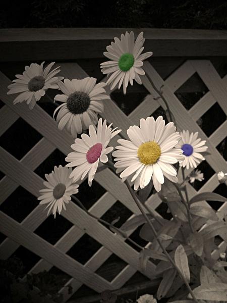 Daisy\'s by duneshot