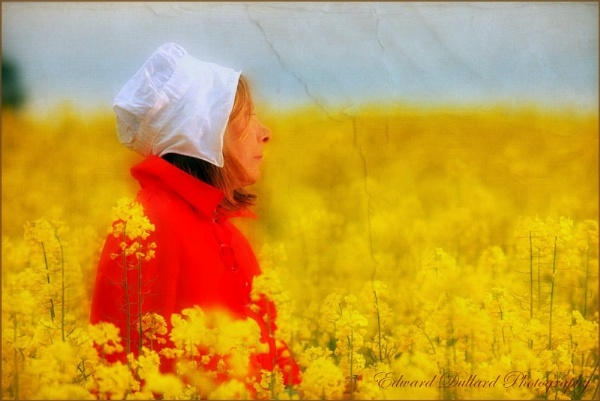 LOST IN A SEA OF YELLOW. by EDWARDDULLARD