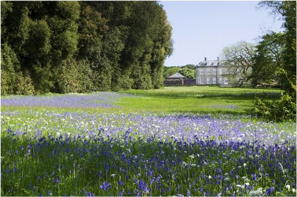 Antony House bluebells by AshTree