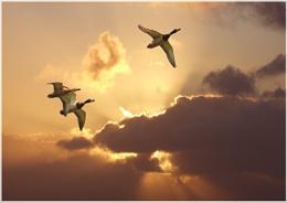 Flights and landings