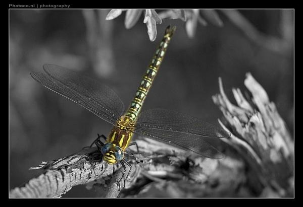 Dragon\'s colour by co