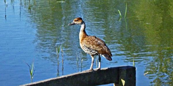 Unknown Bird by cedricd