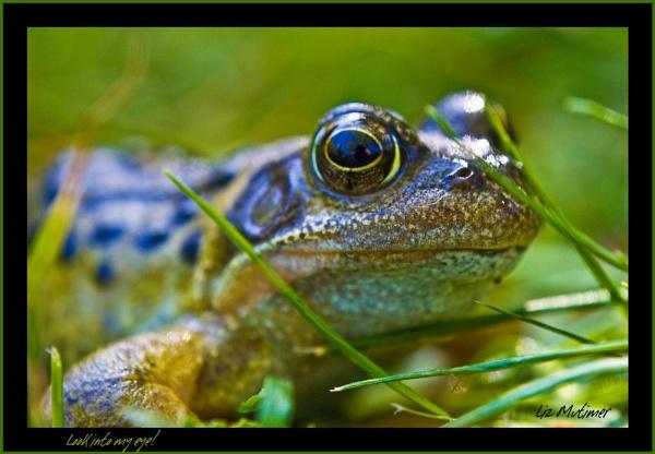 Look into my eye! by LizMutimer