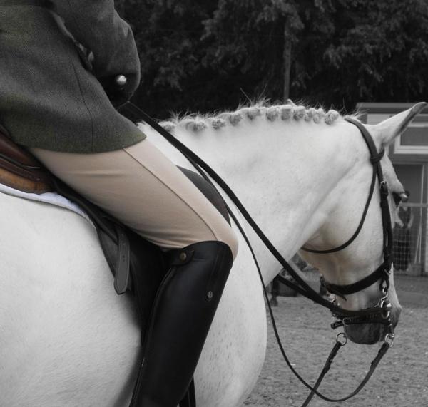 Horse2 by maryatsix