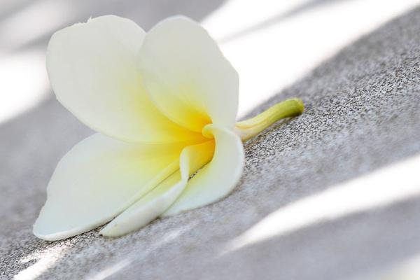 Fallen flower by dentex