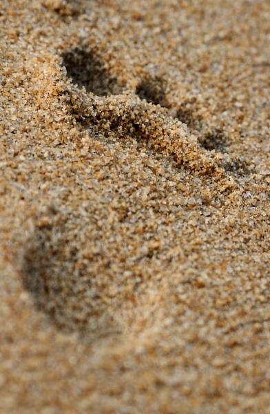 footprint by dentex