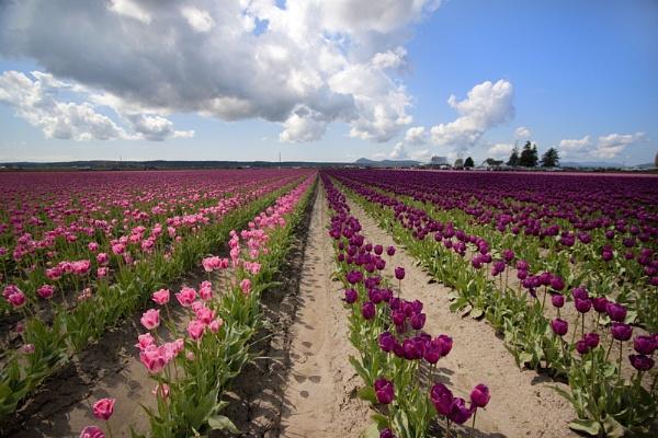 Fields of Colour by delwestcoast