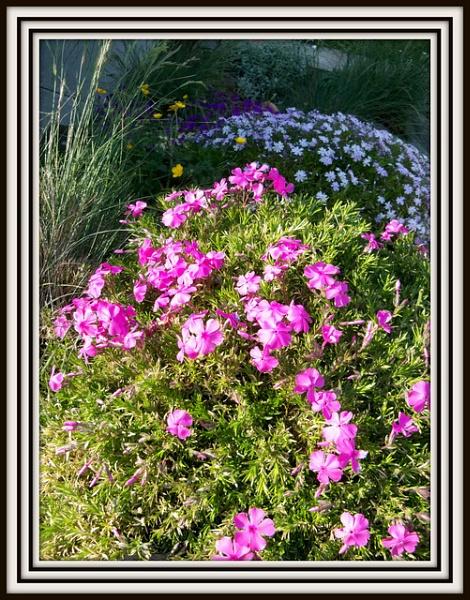 Rockery Flowers by Peagreen