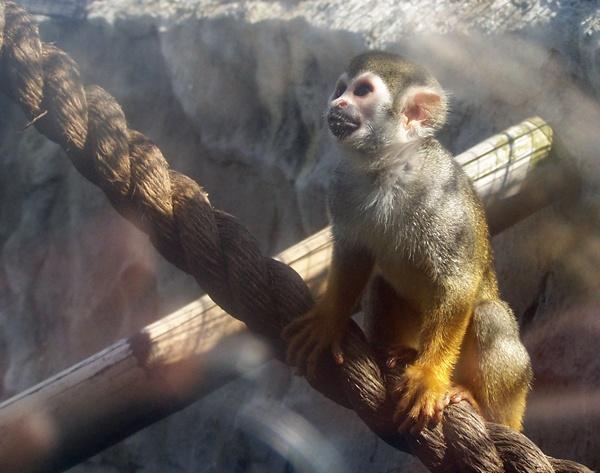 M - Monkey by KT4698