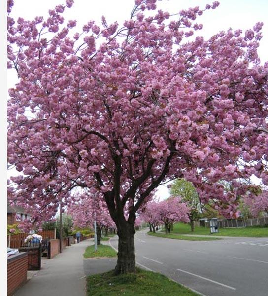 Signs of Spring 9. by Gypsyman