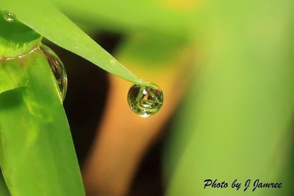Water droplet by JJamree