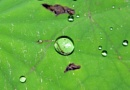 Insect trapped in a drop of Water