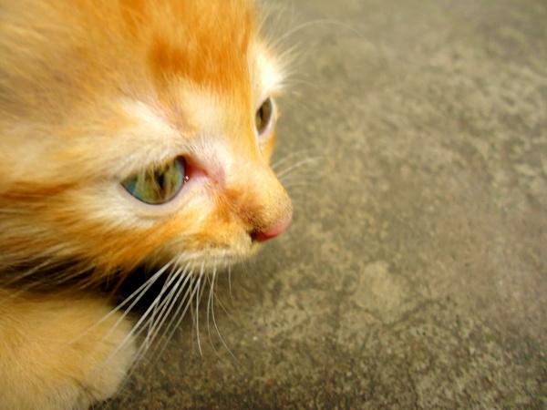 Cutie Kitten by lobski