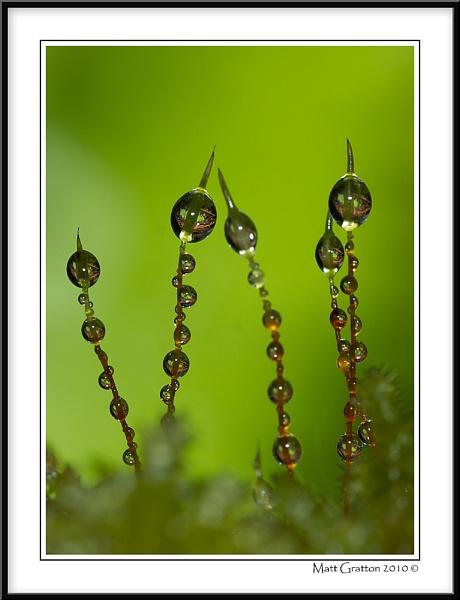 Moss Drops by mohikan22