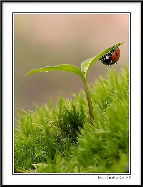Ladybird by mohikan22