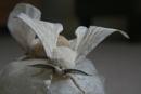 Silk Worm Moth