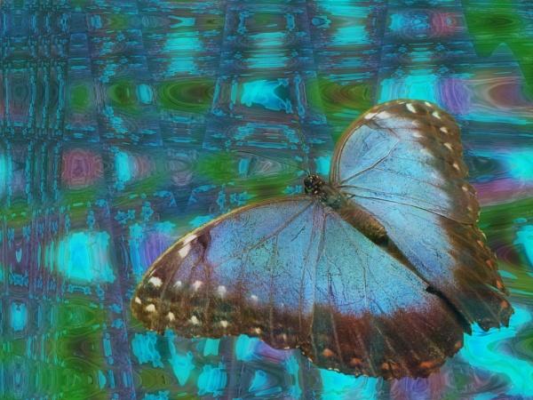 Butterfly Dreams by gingerdelight