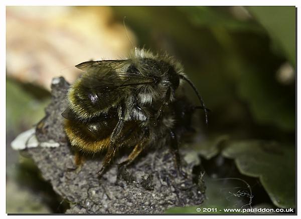 Bonking Bees! by Paul_Iddon