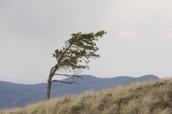 West wind by lionking