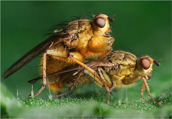 Fly Love by dandeakin
