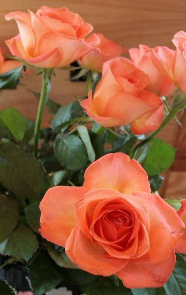 Rose by carp_27