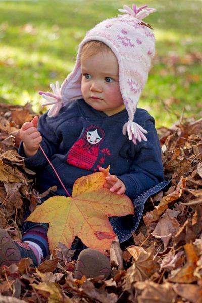Aussie Autumn by millymcb