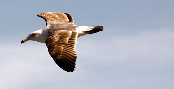 Birdy by jonathanbp