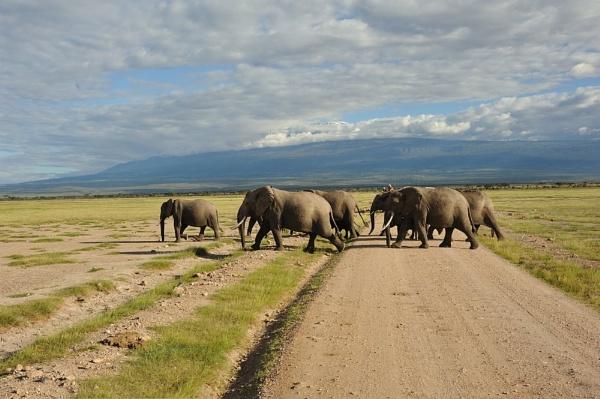 STOP!!! Elephants crossing by carolinematt