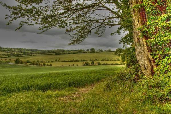 Nettleden, Hertfordshire. by Stoneskimmer