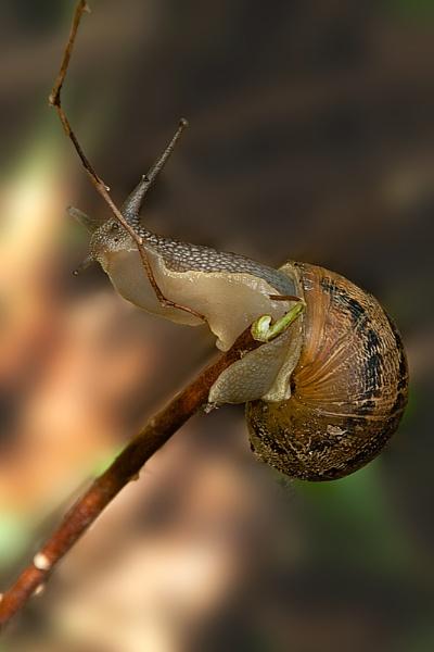 Snail by Alan_Baseley