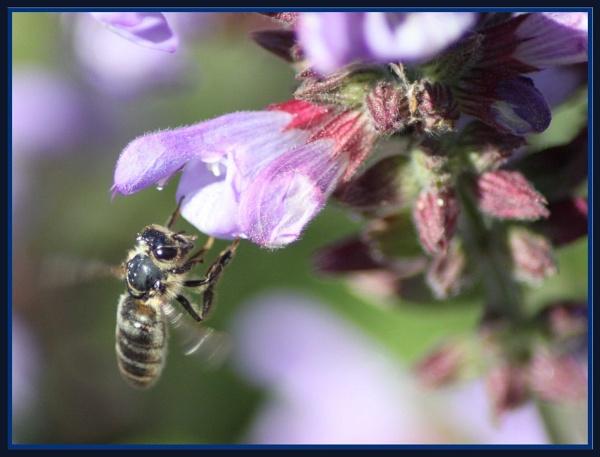 Mr Bee by SpanishDave