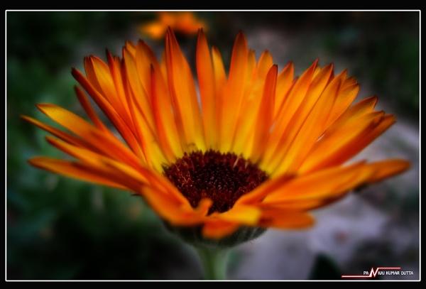 Orange fire by pankaj_dutta
