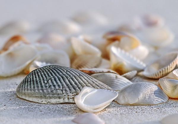 Shells by dentex