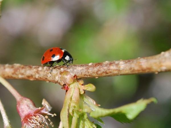 Ladybird by toniiixx