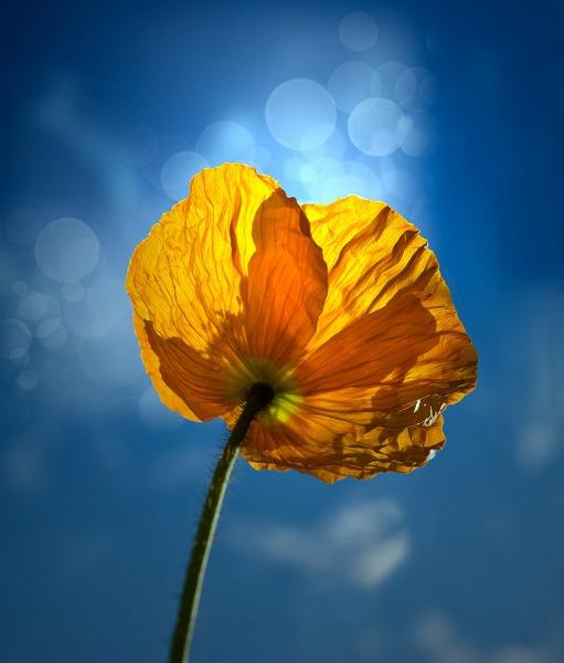 reaching the sun by blomman