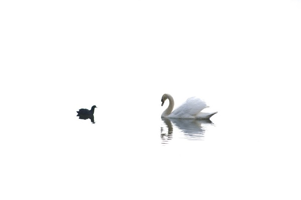Swan Lake by Metro6R4