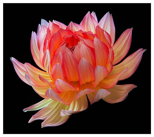 Unfolding petals by KENZIEBOY