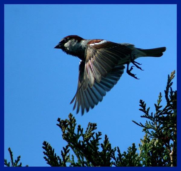 Take off by Heffo1
