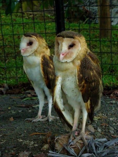 The Owls by lobski