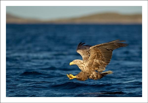 Where Eagles Dare by Jules_Cox