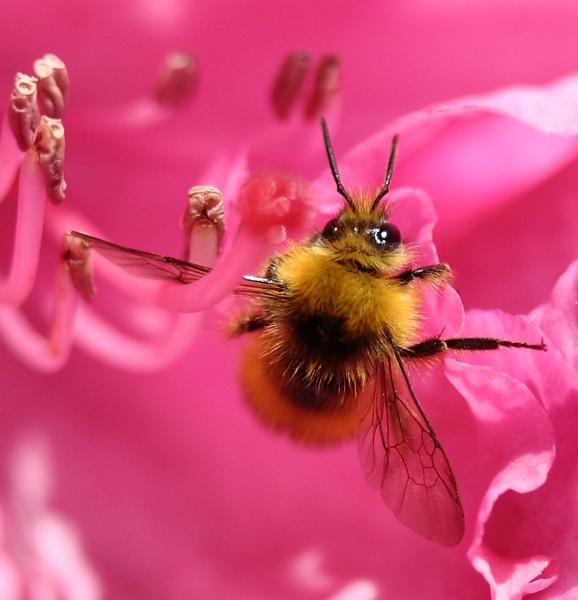 Balancing bee by steve5452