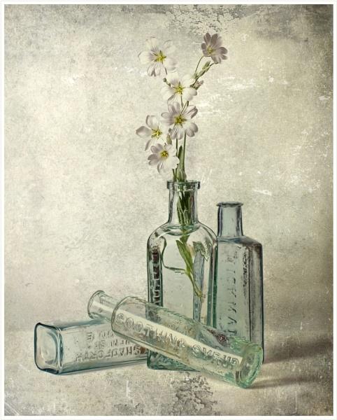 Flowers & Bottles by cattyal