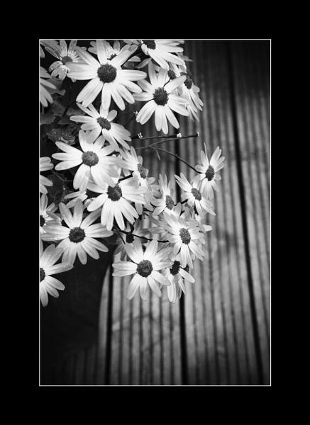 Garden Flowers by chrispo