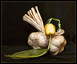 Garlic & tulip