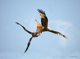Red Kite Challenge.