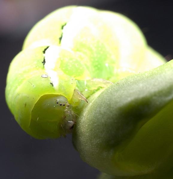 Caterpillar by Nick_potts