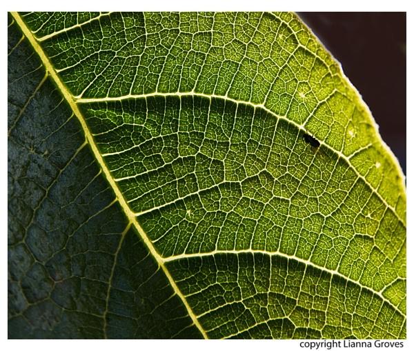 Fig Leaf by lianna