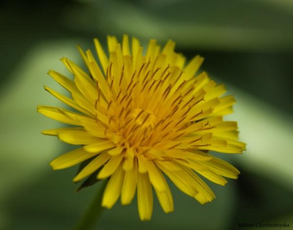 Yellow... by mishu78