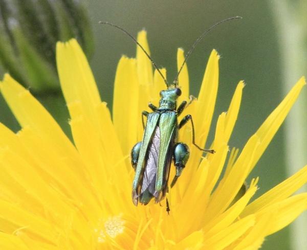 Bug! by cheddar-caveman